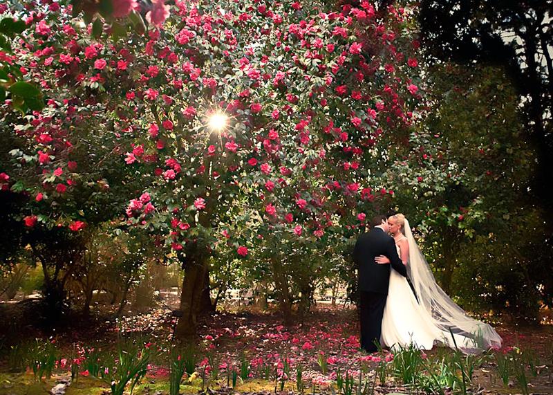 magnolia plantation camellia garden charletson wedding photography